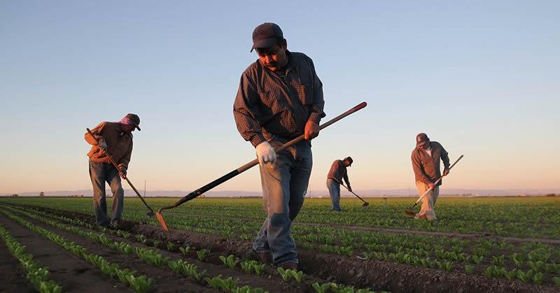 Quem tem direito à aposentadoria Rural